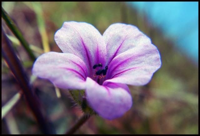 web bloem 2