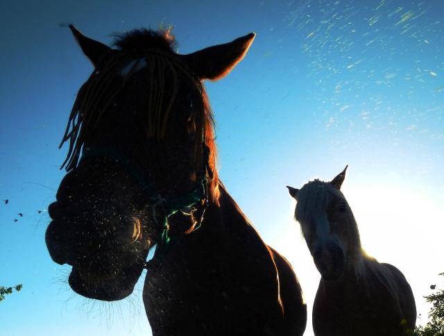 paard niest