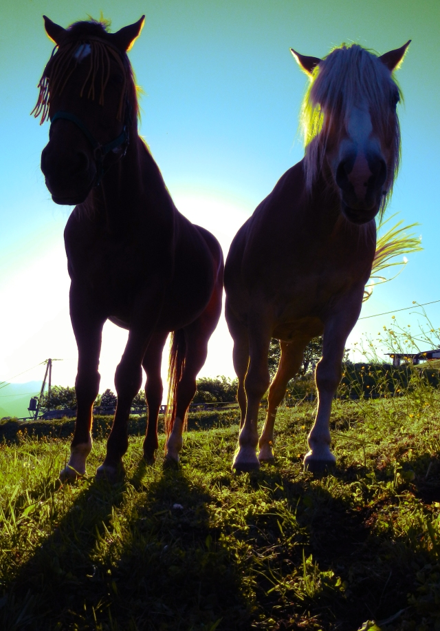paarden 1