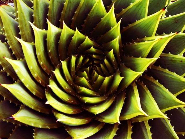 web flower 2