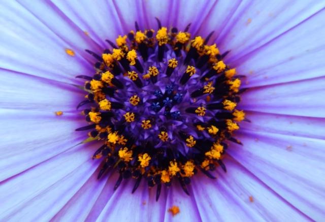web flower 7