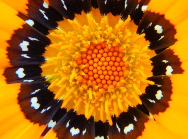 web flower 8