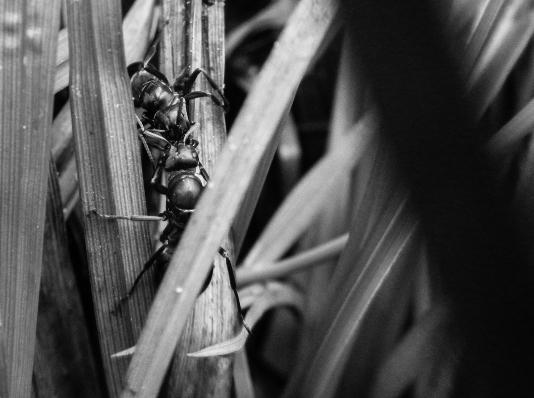 web ant 1