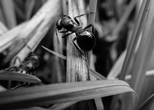 web ant 2