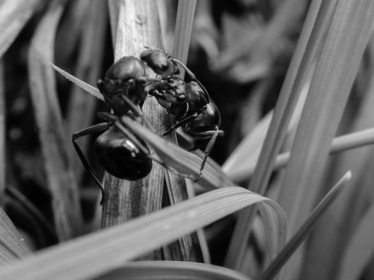 web ant 3