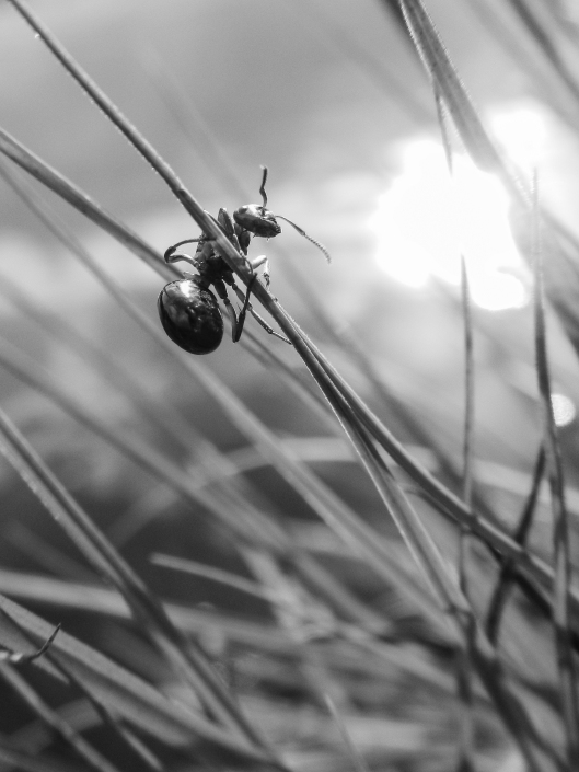 web ant 7